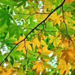 Tribute to Autumn: Lyricism of Kokinshu
