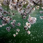 Spring, Summer, Fall and Winter: Spring in Your Step